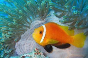 Malediven-Riff-Korallen-Fische-orange-cultureandcream-blogpost