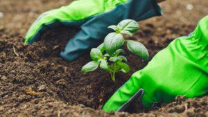 Garten-Gartenarbeit-Pflanzen-Kräuter-Basilikum-cultureandcream-blogpost