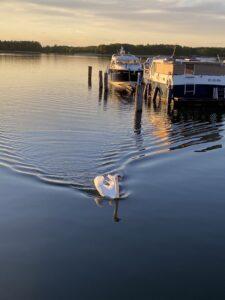 boat-trip-harbour-Fuerstenberg-swan-lakecultureandcream-blogpost