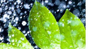 Face-Mist-Blätter-Wasser-Spray-cultureandcream-blogpost