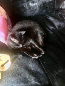cat-back-sofa-black-invisible-cultureandcream-blogpost