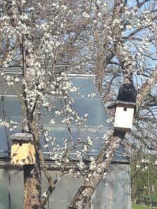 cat-blooming-tree-nesting-box-cultureandcream-blogpost