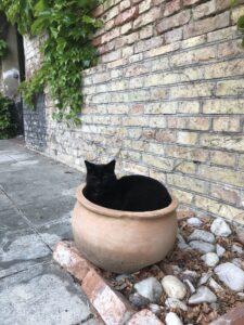 cat-black-flowerpot-nesting-cultureandcream-blogpost