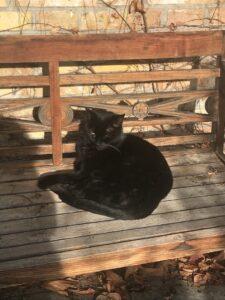 cat-black-tomcat-cultureandcream-blogpost
