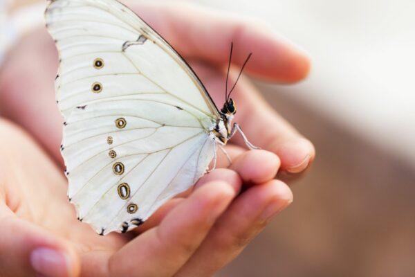 Schmetterling-Hand-Gefühl-Loslassen-cultureandcream-blogpst